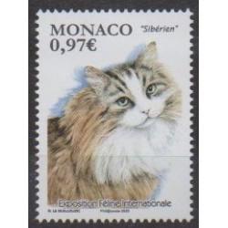 Monaco - 2020 - Exposition féline internationale - Chats