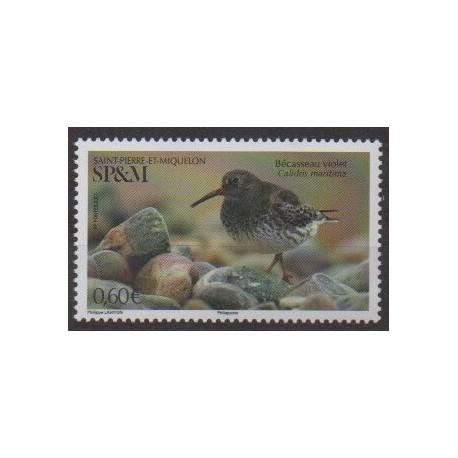 Saint-Pierre et Miquelon - 2021 - No 1253 - Oiseaux - Bécasseau violet